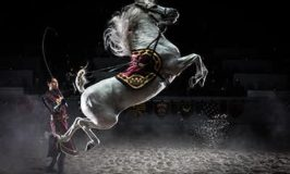 medievaltimes -New year Eve Places to celebrate