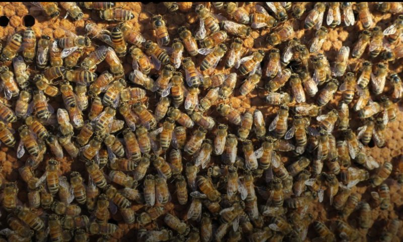 Killer Bees Honey Tours – Sapphire Valley, North Carolina