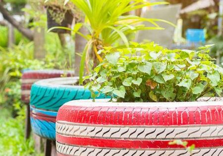 10 Houseplants That Will Benifit Your Air